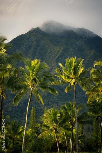 Fotobehang Landschap morning kauai vibes