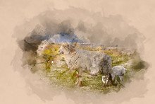 Watercolour Painting Of Sheep And Lamb Close Up At The Welsh Countryside In Brecon Beacons, Wales