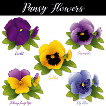 Pansy Flowers And Johnny Jump Ups (Violas). Spring Blossoms In Purple, Violet, Lavender, Golden And Sky Blue Isolated On White Background.