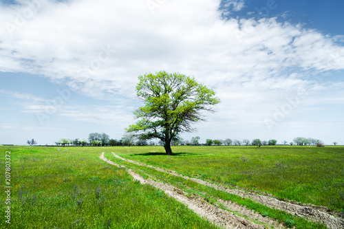 Fotobehang Wit Summer landscape with green grass, road and clouds.