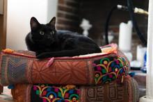Black Cat On Cushions