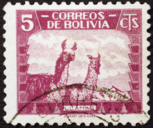 Two Lamas On Vintage Bolivian ...