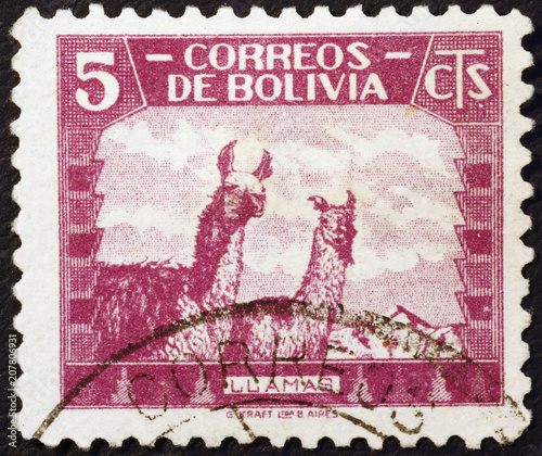 Photo Two lamas on vintage bolivian postage stamp
