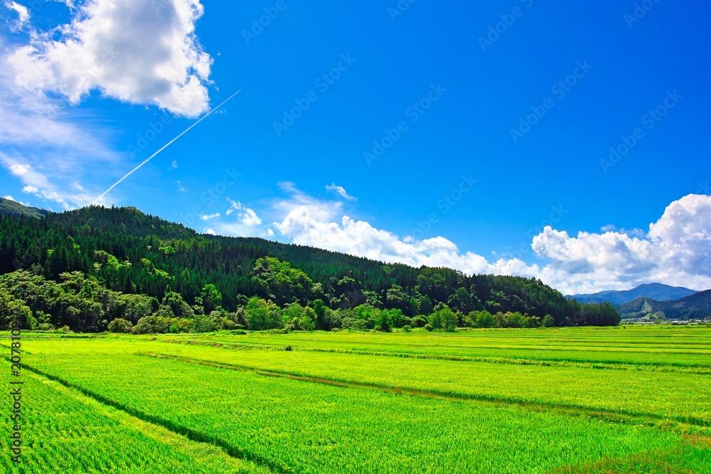 Fototapeta 田舎の夏休みイメージ