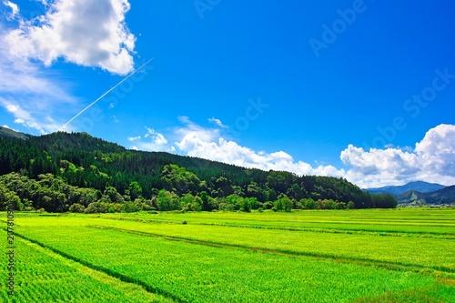 Fototapeta 田舎の夏休みイメージ obraz