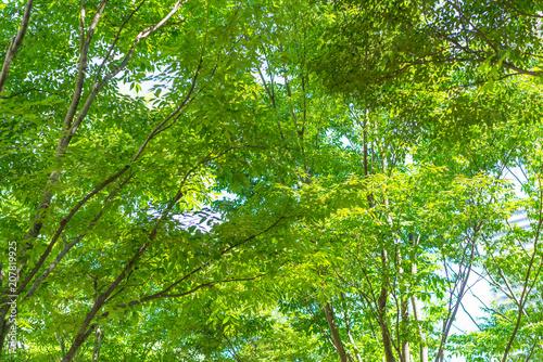 Fotobehang Aan het plafond 新緑