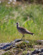 Wild Birds In The Wilderness HD