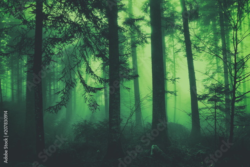 Fantasy dark green colored fairytale foggy forest tree landscape. Color filter effect used.