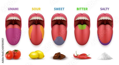 Human tongue basic taste areas Wallpaper Mural