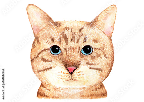 Portrait of a British cat. Watercolor illustration.
