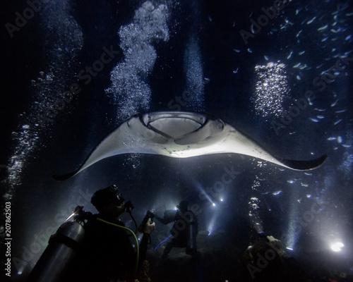 Manta Night Dive Fototapeta