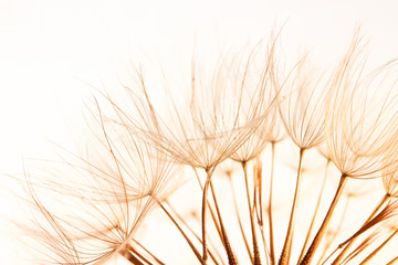 FototapetaDandelion seeds on light background, close up