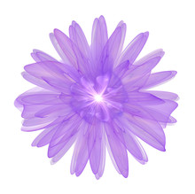 Purple 3d Flower Isolated On W...
