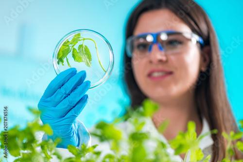 Cuadros en Lienzo Biologist Examining Samples