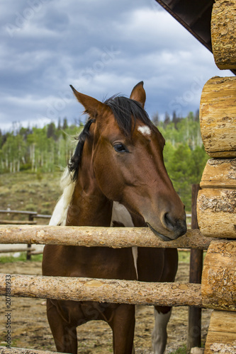 Horse with Brown and White Patches Watches Storm Clouds Roll in over the Rocky Mountains in Colorado, USA