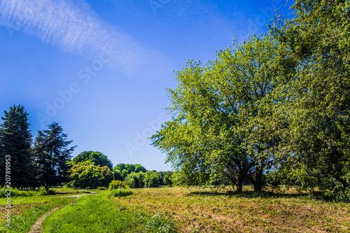 Foto op Plexiglas Weide, Moeras Sunny day in summer park