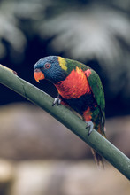 Close-up Of Bright Parrot In Green