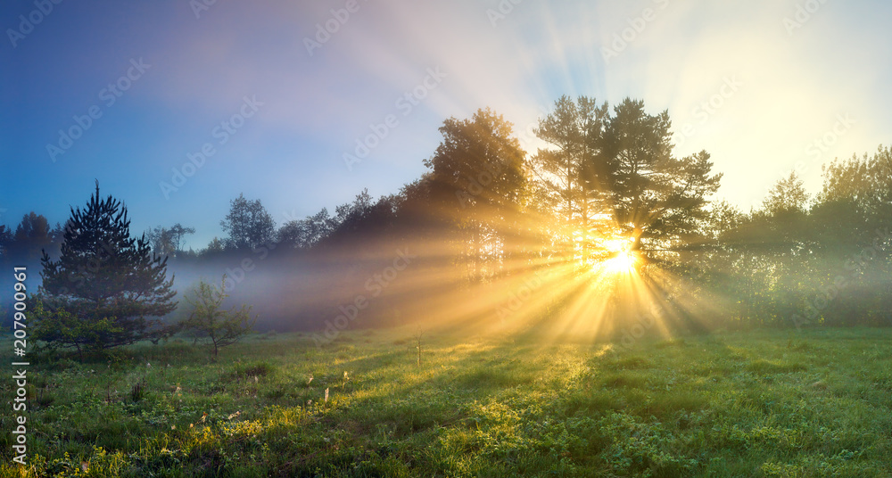 Fototapety, obrazy: panorama landscape with sun and forest and meadow at sunrise