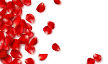 Red Rose Petals And Beads On White Background.Happy Valentines Day. Vector Holiday Illustration. Festive Decoration. Wedding Background.
