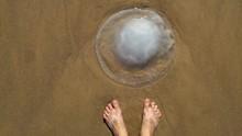 Jellyfish Season Concept Image...