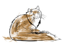 Vector Wathercolor Sketch. Siberian Forest Cat On A White Background.