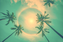 Sun Rainbow Circular Halo Phenomenon With Palm Trees, Vintage Summer Background