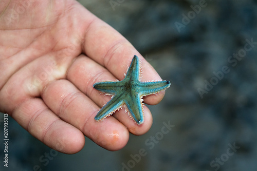 Photo small gray starfish on the palm of your hand