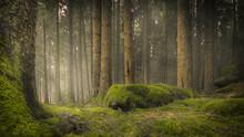 Baumstämme Auf Moosigem Waldb...