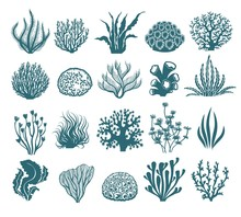 Seaweeds And Coral Silhouettes...