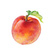 Watercolor Fresh Peach. Hand D...