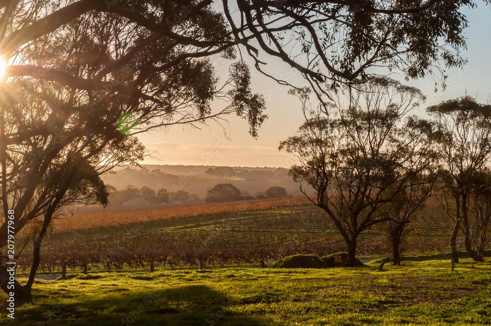 Winter view of McLaren Vale vineyards.