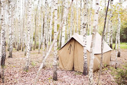 Tent in?birch tree grove