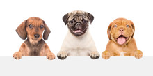 Group Of Puppies Above White B...