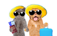 Kitten And Puppy With Summer Hats And Sunglasses Holds Suitcases, Tickets And Passport Ready For A Vacation. Isolated On White Background