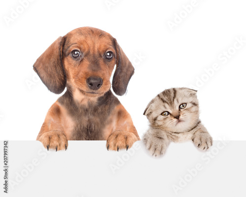 Papiers peints Montagne dachshund puppy and cute kitten peeking above empty white board. isolated on white background. Space for text