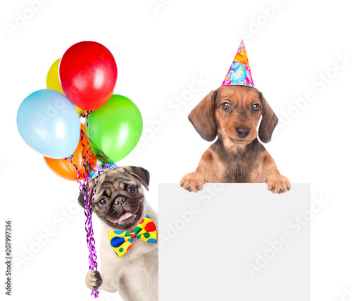 Dogs In Birthday Hats With Balloons Above White Banner Isolated On Background