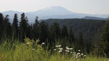 Mount St. Helens In Skamania C...