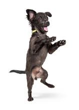 Funny Happy Playful Puppy Danc...