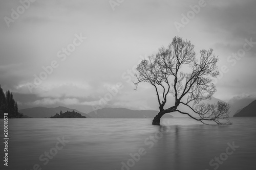 Fototapety, obrazy: The Tree in Lake Wanaka, south Island, New Zealand landscape, B&W color