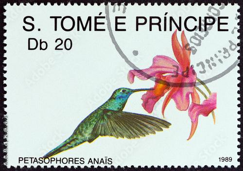 Tela  Petasophores anais (Sao Tome and Principe 1989)