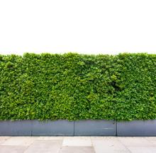 Decorative Green Garden On A C...