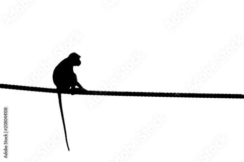 In de dag Aap Macaque, Sabah Borneo