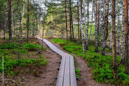 Papiers peints Cappuccino wooden boardwalk in bog swamp area