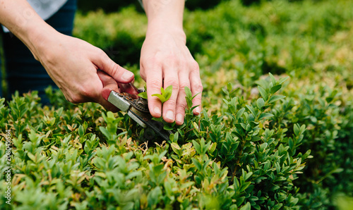 Woman pruning box hedge in a formal garden