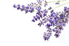 Schöne Blumen Von Lavendel Na...