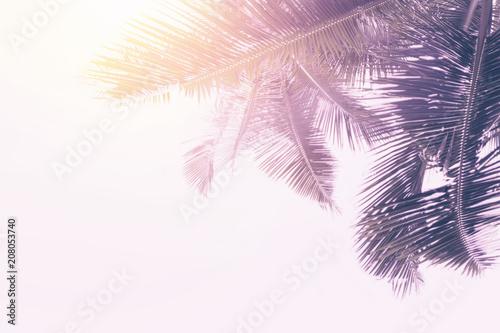 Foto op Plexiglas Historisch geb. Palm