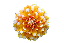 Yellow, Orange And White Dahlia Flower Macro Photo. Picture In Color Emphasizing The Orange Colours In An Intricate Geometric Pattern. Flower Isolated On A Seamless White Background.