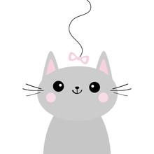 Gray Cat Head Face Looking At ...