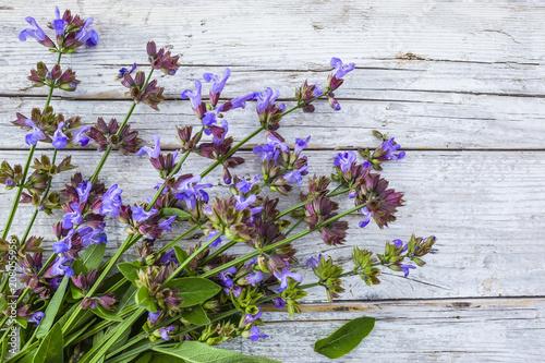 Papiers peints Condiment Freshly cut flowering sage from the herb garden.