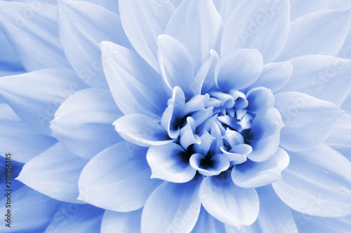 Poster de jardin Dahlia Light blue and white dahlia flower macro photo. Picture in color emphasizing the light pastel blue colours and purple shadows in an intricate geometric pattern.